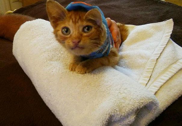 injured-kitten-hit-car-body-cast-purrito-davey-12
