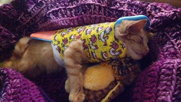 injured-kitten-hit-car-body-cast-purrito-davey-13