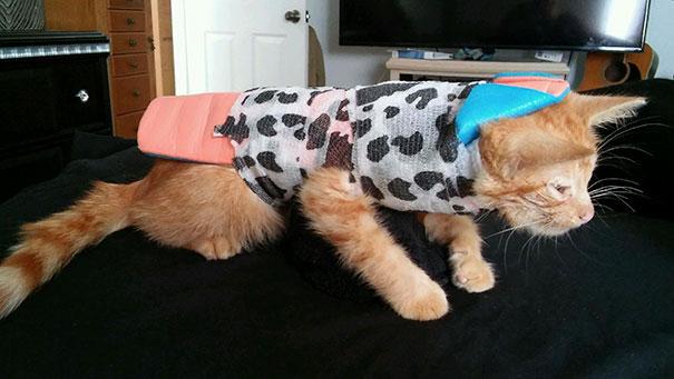 injured-kitten-hit-car-body-cast-purrito-davey-15