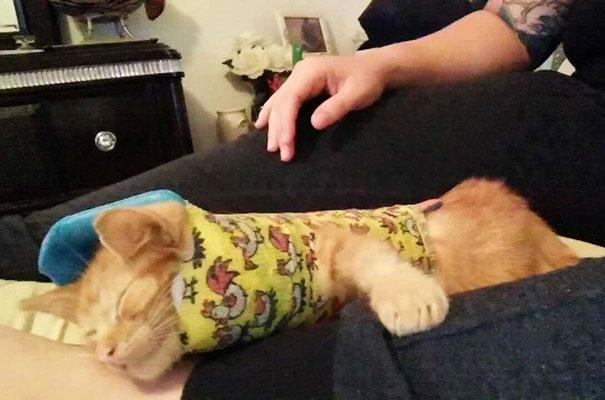 injured-kitten-hit-car-body-cast-purrito-davey-7