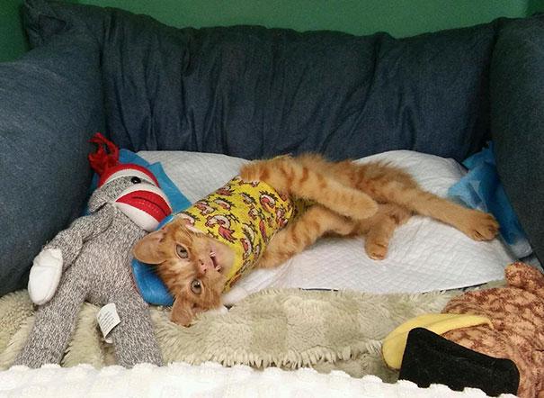 injured-kitten-hit-car-body-cast-purrito-davey-8