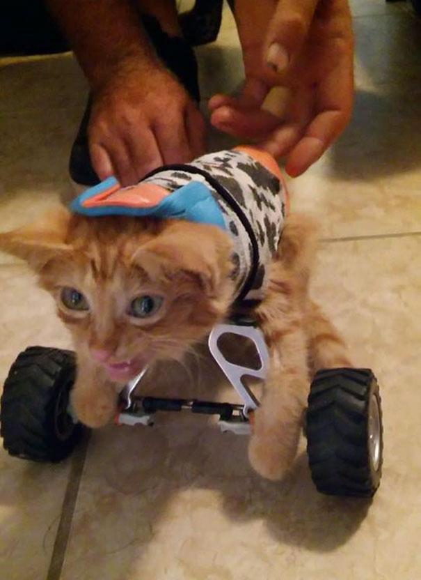 injured-kitten-hit-car-body-cast-purrito-davey-9