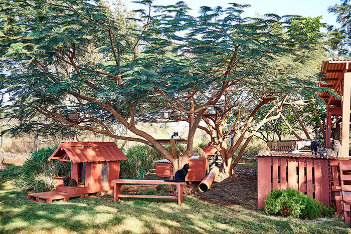 lanai-cat-sanctuary-hawaii-12
