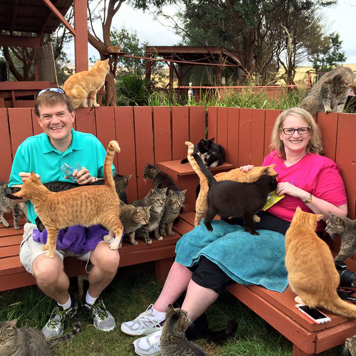 lanai-cat-sanctuary-hawaii-21