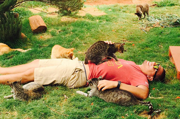 People Come From All Over The World To Cuddle 500 Kitties At This Cat Sanctuary In Hawaii