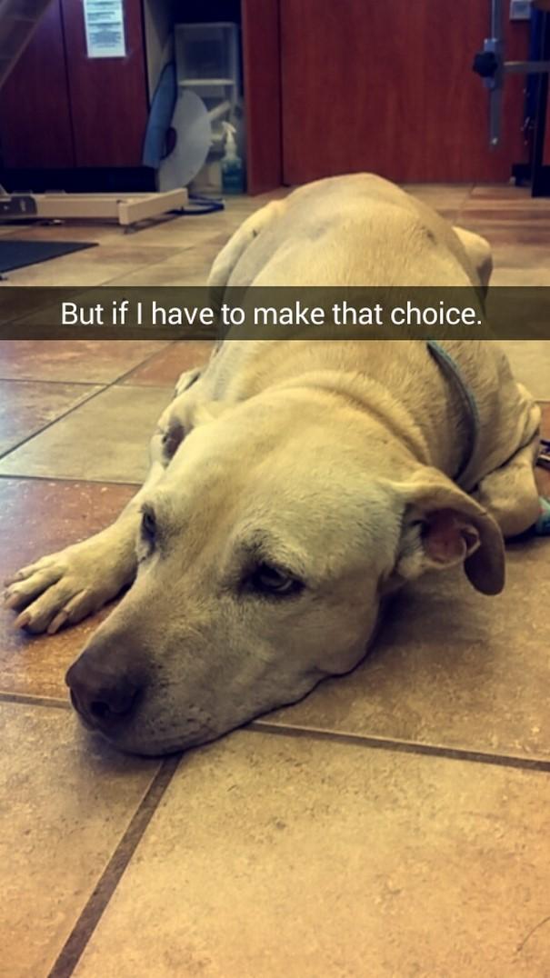 last-day-dying-dog-snapchat-hannah-a1