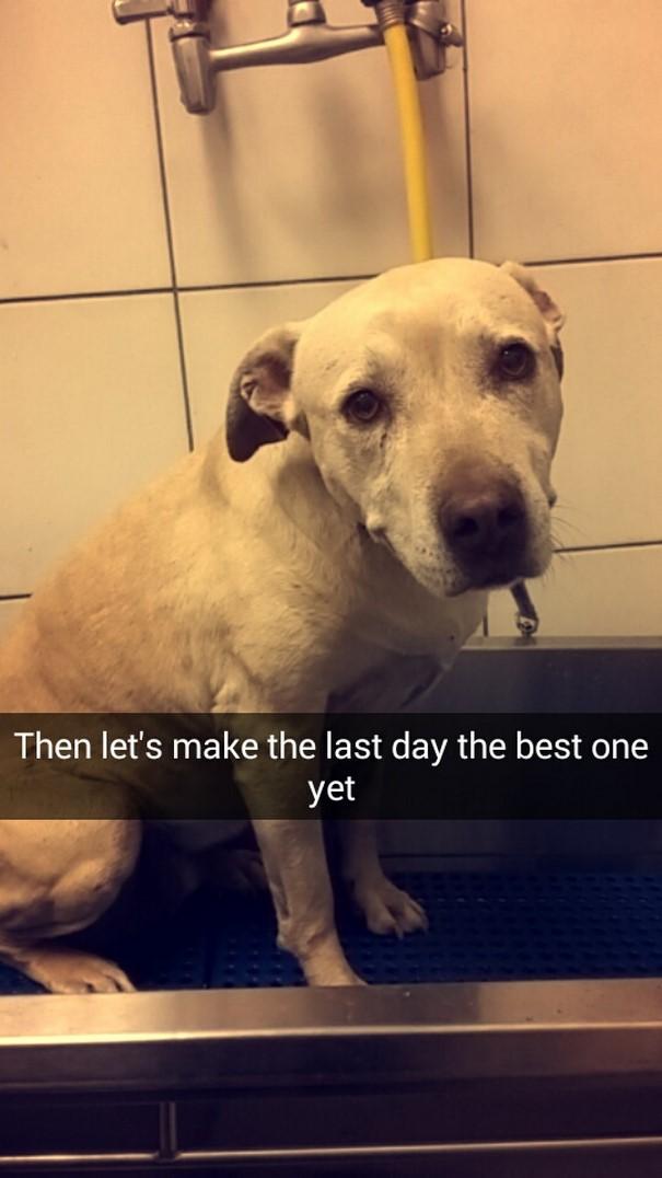 last-day-dying-dog-snapchat-hannah-a17