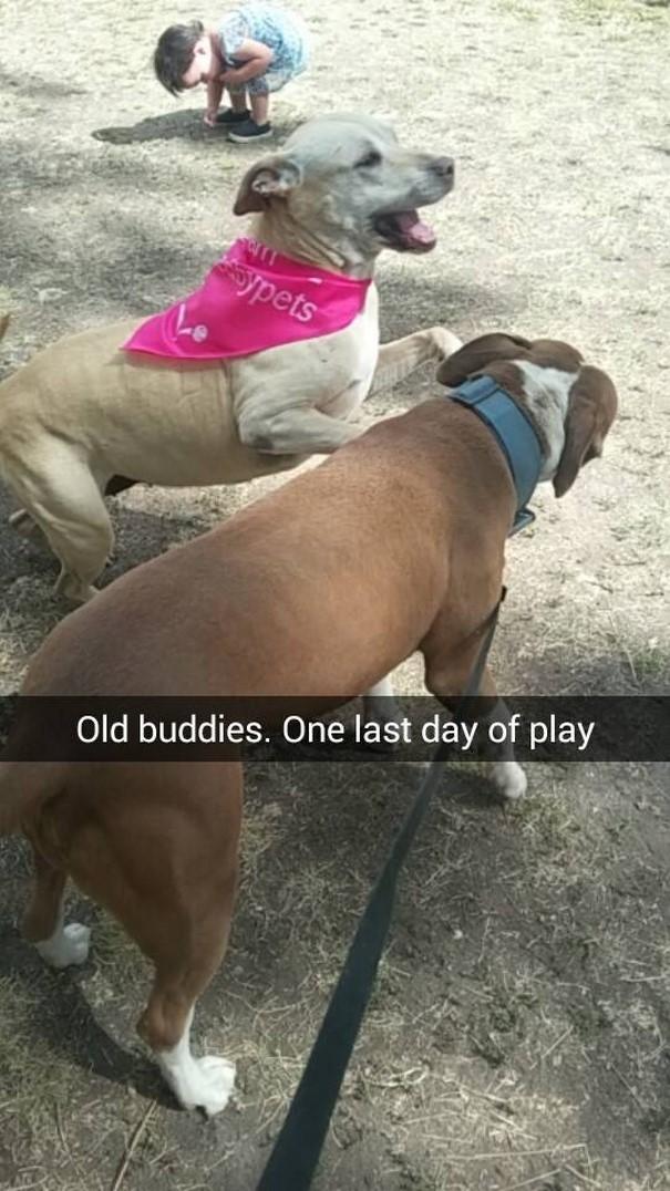 last-day-dying-dog-snapchat-hannah-a23