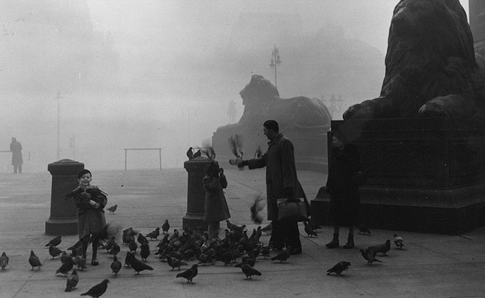 A Family Feeding The Famous Pigeons In London's Trafalgar Square, 1952