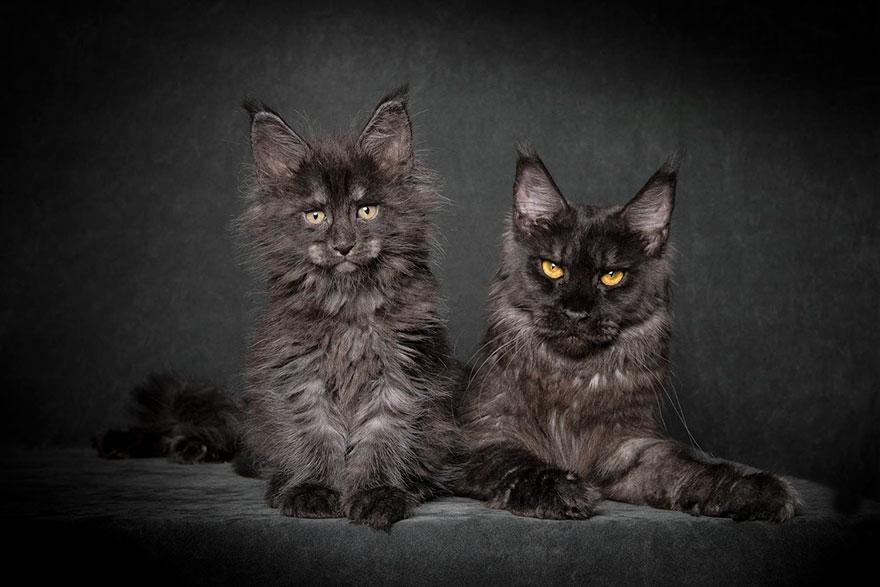 Mythical Black Cat