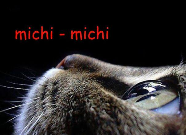 michi-michi-foto-grande-57a6be3ed9fdf.jpg