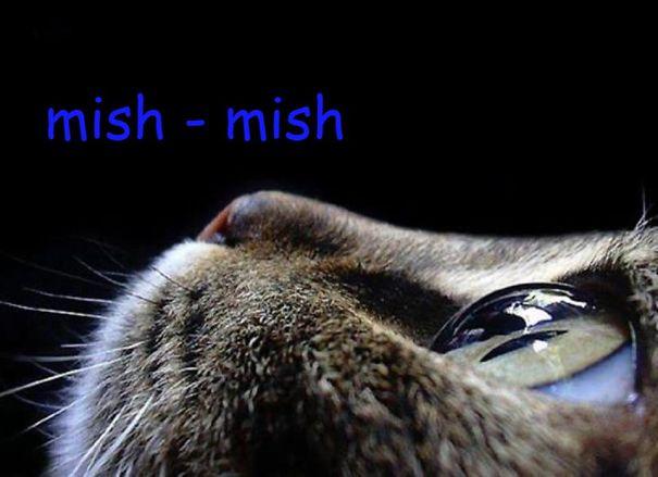 mish-mish-foto-grande-57a6b656584d1.jpg