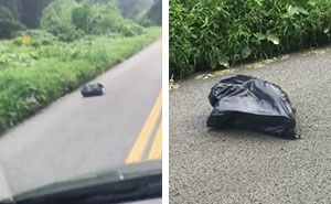 Woman Sees A Moving Garbage Bag On The Road, Stops Her Car To Save It