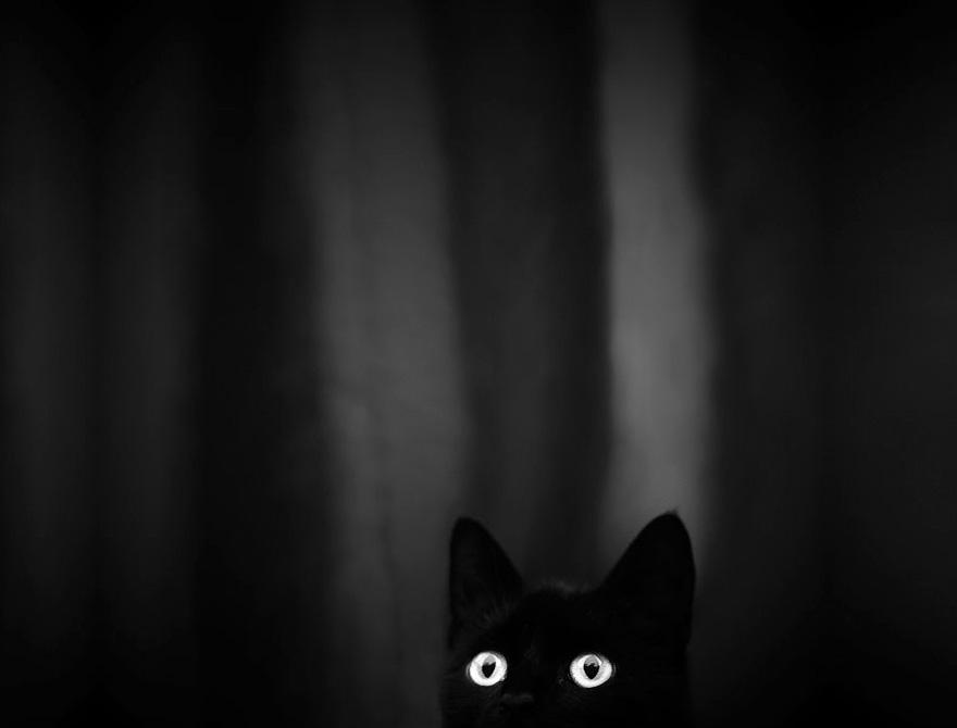 gato misterioso