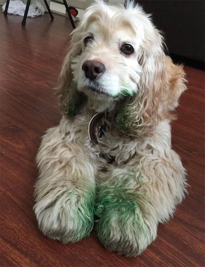My SO And I Adopted The Dopiest 7-Year-Old Dog About A Year Ago. He Managed To Find A Tube Of Green Food Dye As A Snack Yesterday