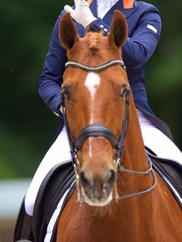 olympic-athlete-saves-horse-parzival-adelinde-cornelissen-2