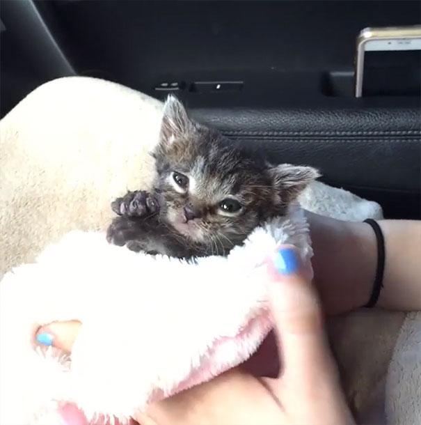 orphaned-kitten-foster-eli-11