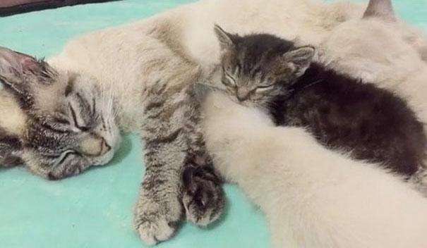 orphaned-kitten-foster-eli-16