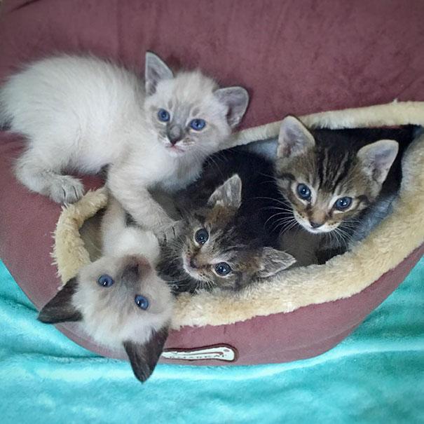 orphaned-kitten-foster-eli-3