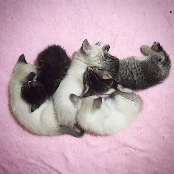 orphaned-kitten-foster-eli-4