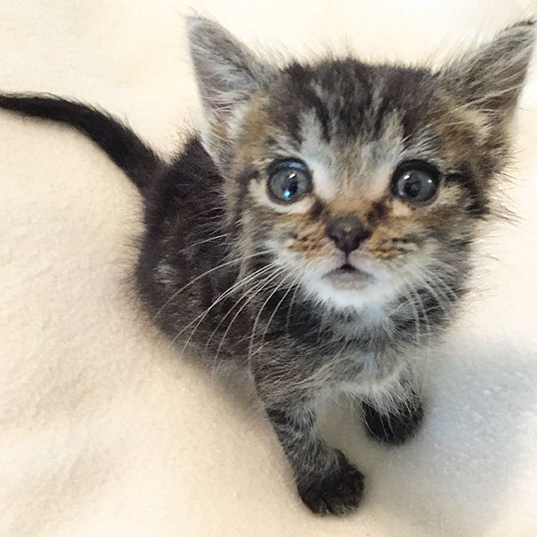 orphaned-kitten-foster-eli-6