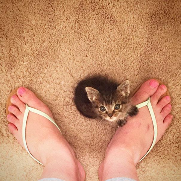 orphaned-kitten-foster-eli-9