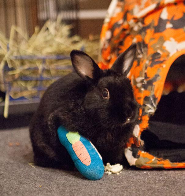 pets-cast-rabbit-bunny