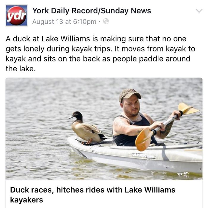 Duck Hitches Rides With Kayakers