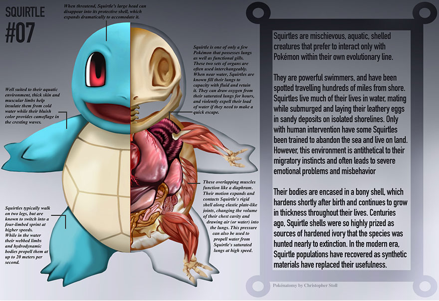 pokemon-anatomy-pokenatomy-christopher-stoll-7