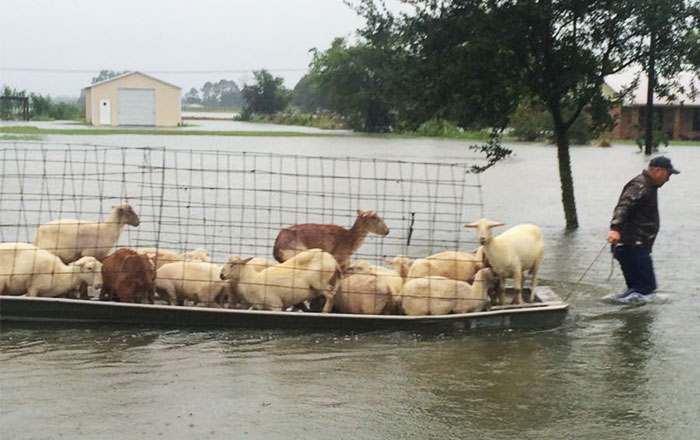 People Refuse To Leave Deadly Louisiana Floods To Save Helpless Animals From Drowning