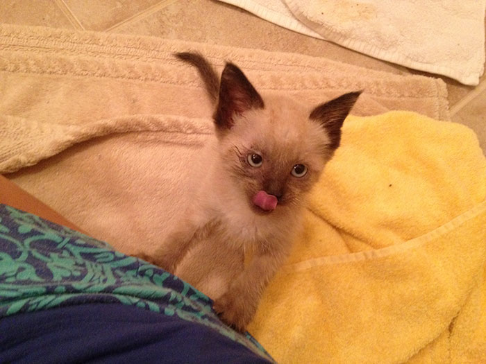 rescue-kitten-transformation-road-yoda-22