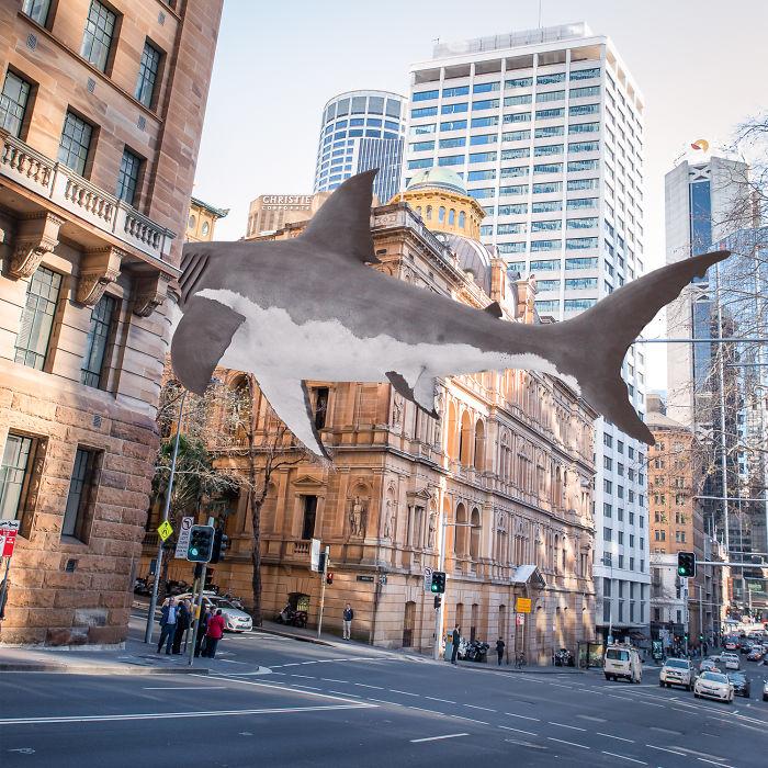 Shark Stroll