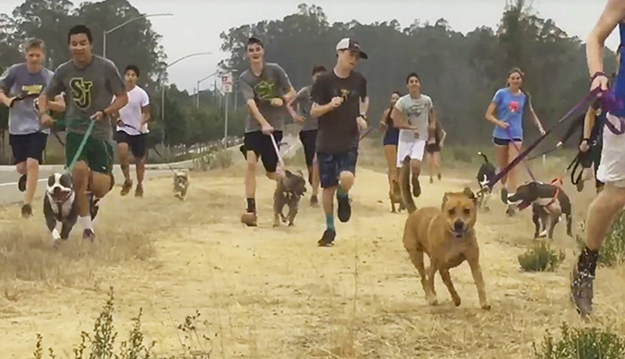 shelter-dogs-run-with-students-1