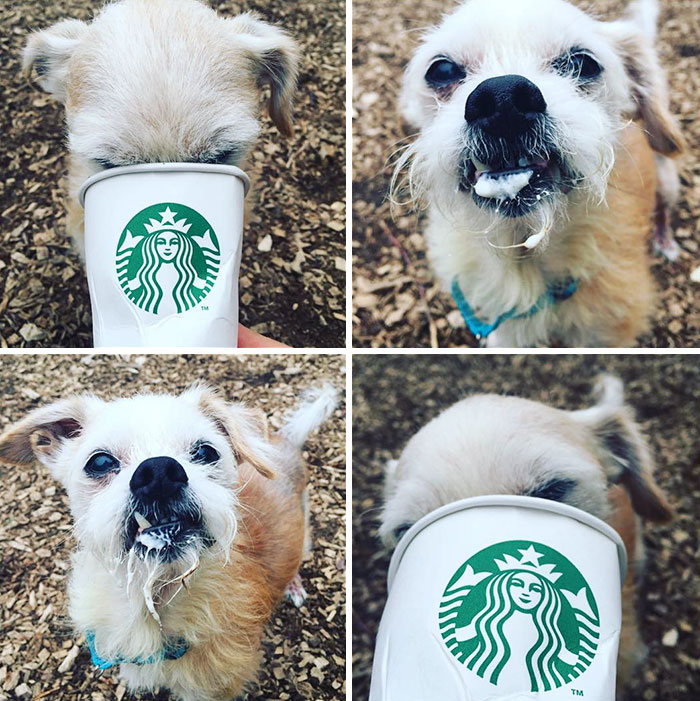 shelter-takes-dogs-puppuccinos-starbucks-4