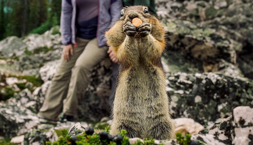 squirrel-photobombs-engagement-photoshoot-kelin-flanagan-spencer-taubner-bdkf-9a