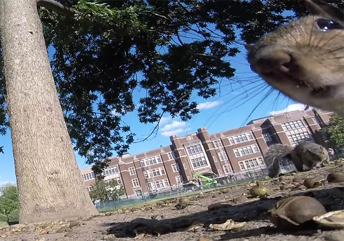squirrel-steals-gopro-pov-1