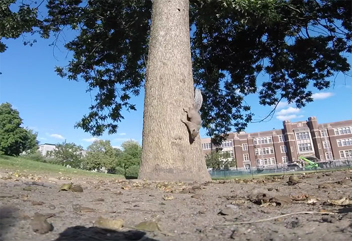 squirrel-steals-gopro-pov-2