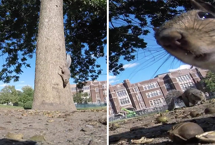 Squirrel Steals GoPro, Shoots Amazingly Good POV Video Running Through A Tree