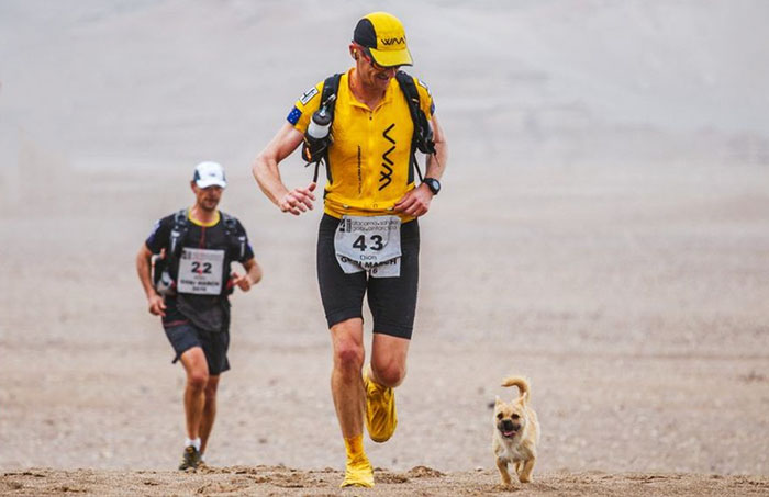 Stray Dog Joins 155-Mile Race, Finishes It With A New Dad