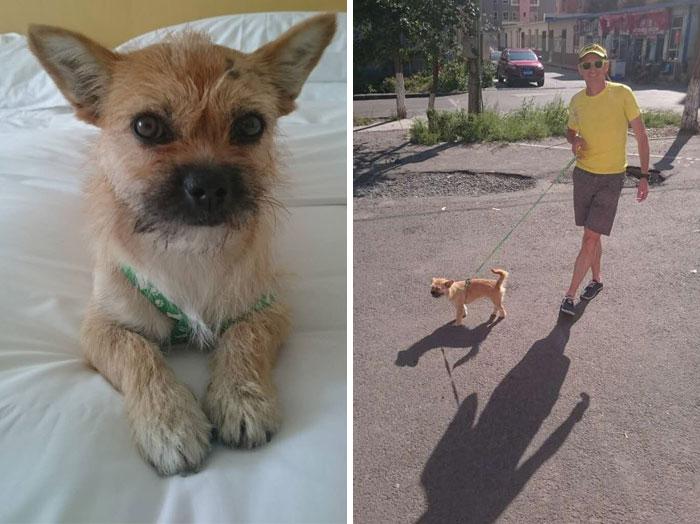 stray-dog-reunited-runner-gobi-dion-leonard-china-9