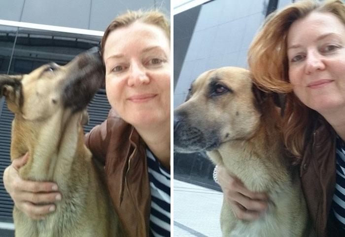 stray-dog-waits-flight-attendant-adopts-rubio-olivia-sievers-1