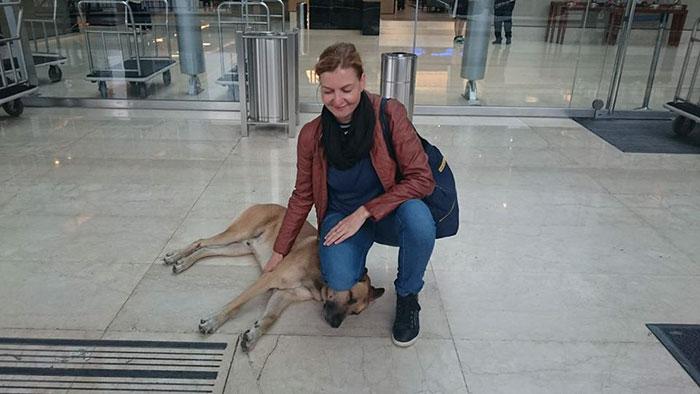 stray-dog-waits-flight-attendant-adopts-rubio-olivia-sievers-13