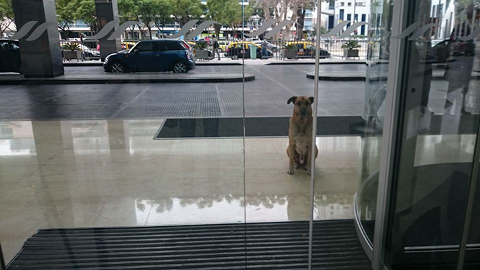 stray-dog-waits-flight-attendant-adopts-rubio-olivia-sievers-16