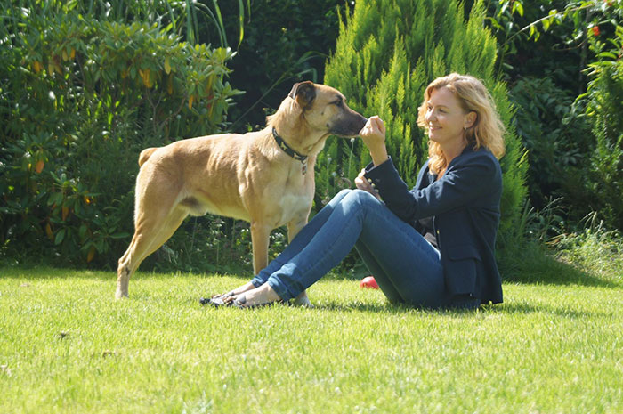 stray-dog-waits-flight-attendant-adopts-rubio-olivia-sievers-2