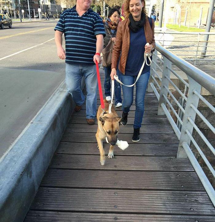 stray-dog-waits-flight-attendant-adopts-rubio-olivia-sievers-9