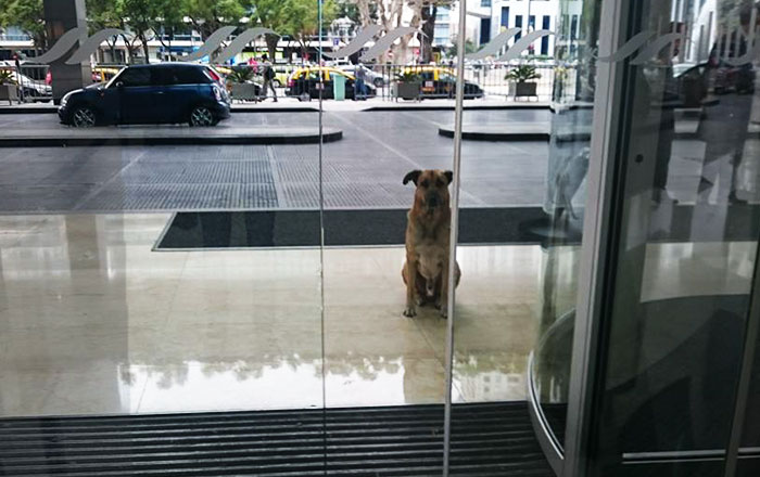 Flight Attendant Adopts Stray Dog Who Wouldn't Stop Waiting For Her Outside Hotel