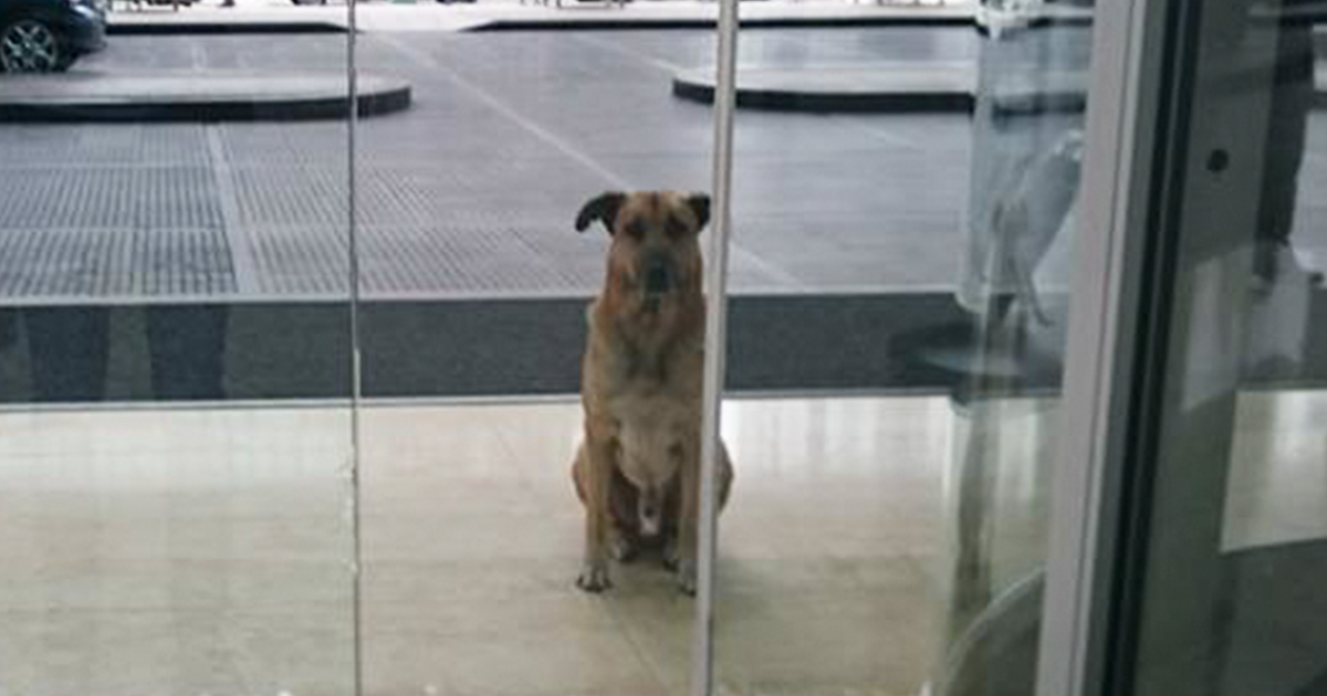 Flight Attenedant Adopts Dog