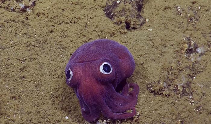 stubby-squid-googly-eyes-3a