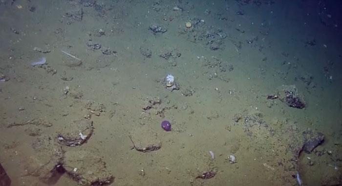 stubby-squid-googly-eyes-4a