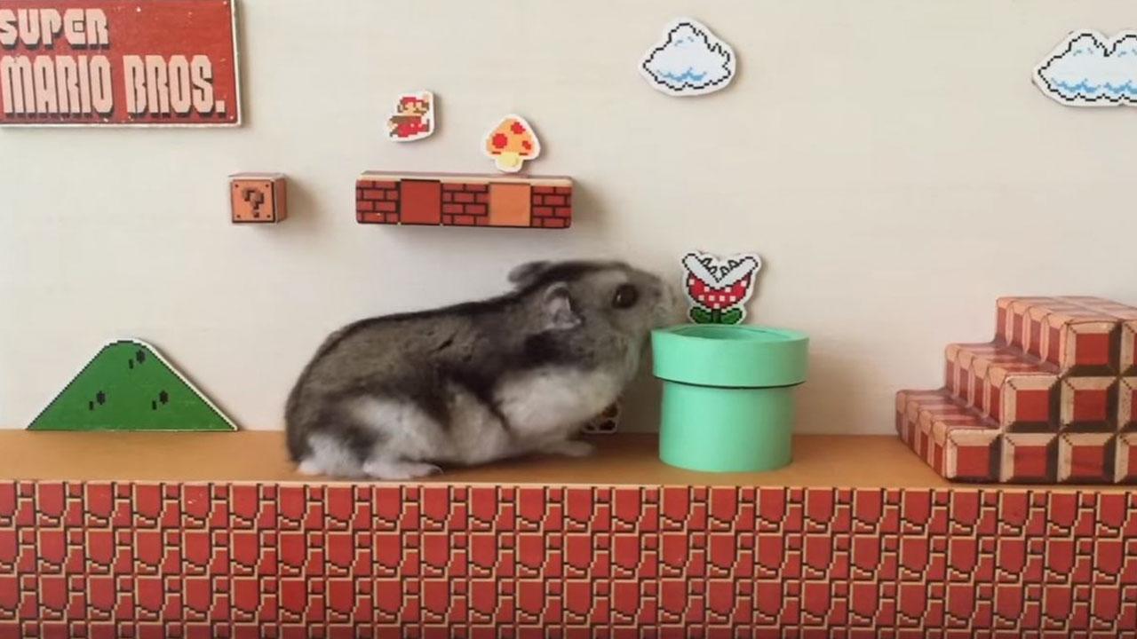 Ставок super hamster супер хомяк игровой автомат руб